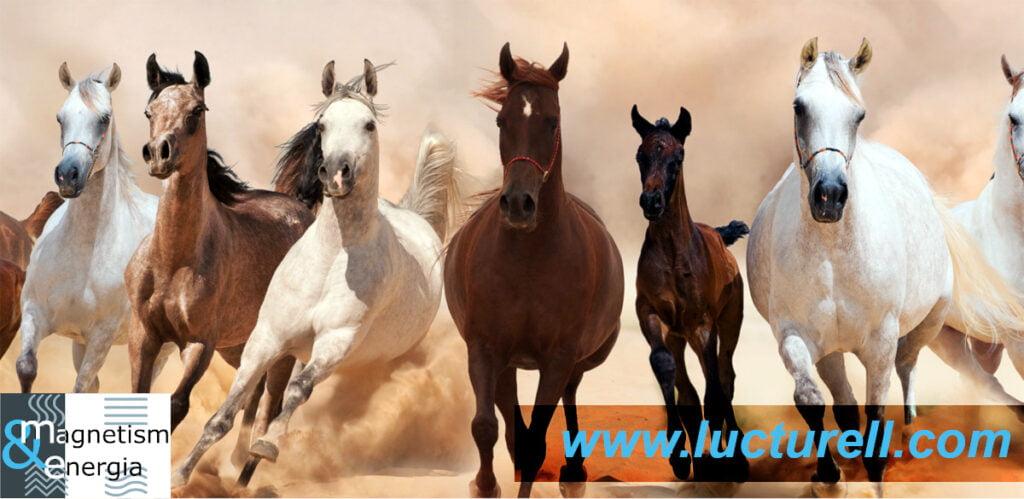 Reiki sur les chevaux